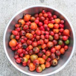 Collect Rose Hips