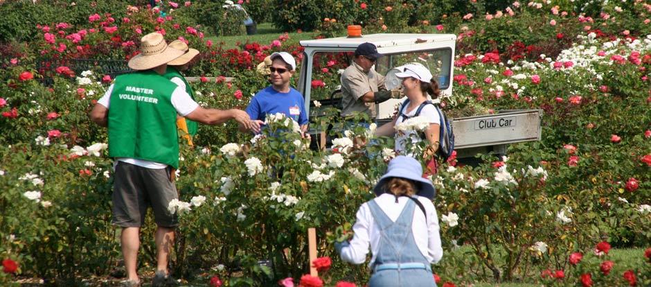 Summer Rose Care Seminar and Volunteer Day! @ San Jose Municipal Rose Garden | San Jose | California | United States