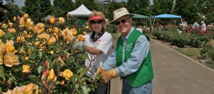 Dead Heading Seminar and Volunteer Day @ San Jose Municipal Rose Garden | San Jose | California | United States