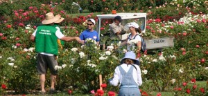 Fall Rose Care and Hands-on Tutorial Event @ San Jose Municipal Rose Garden | San Jose | California | United States