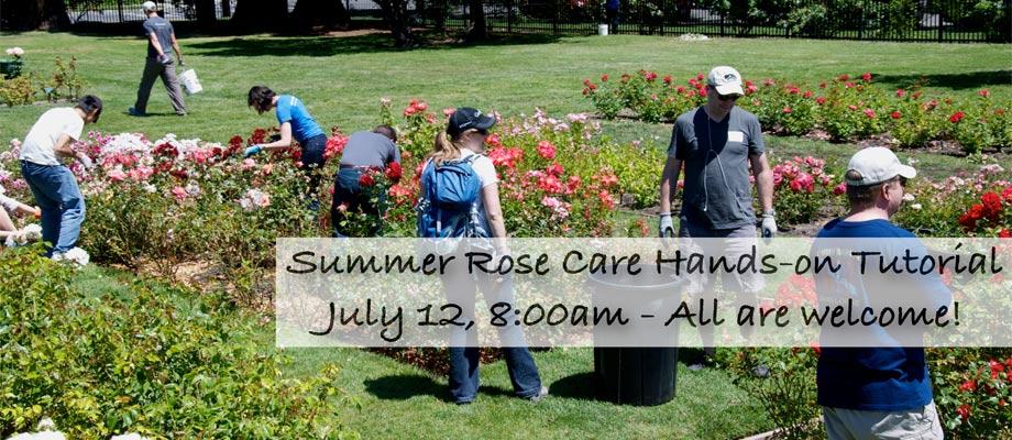 Summer-Rose-Care-2014-slide